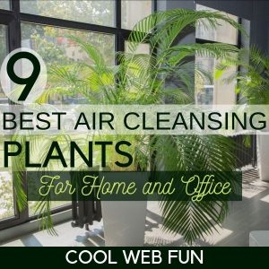 Air Purifying House Plants: 9 Best Air Cleansing Plants for Home & Offices