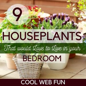 9 Houseplants That Would Love to Live in Your Bedroom