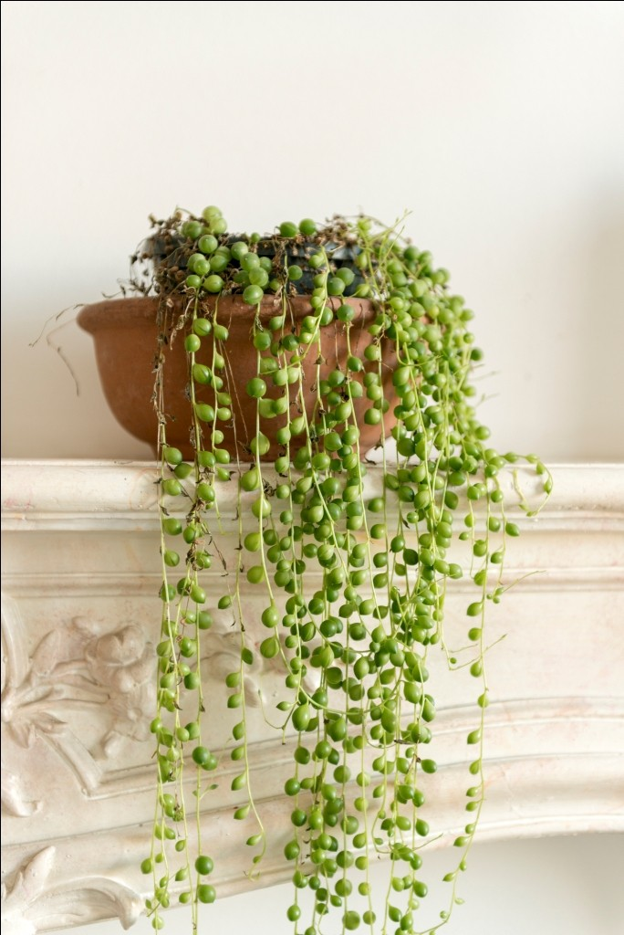 INDOOR HANGING PLANTS