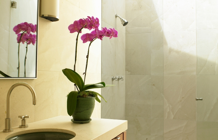 ORCHID HOUSEPLANTS FOR BATHROOM