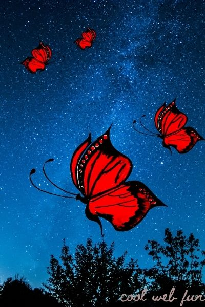 butterfly drawing with animated background