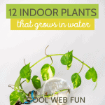 plants that grows in water